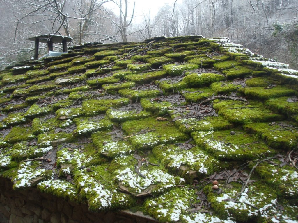 Roof Moss Removal In Bothell