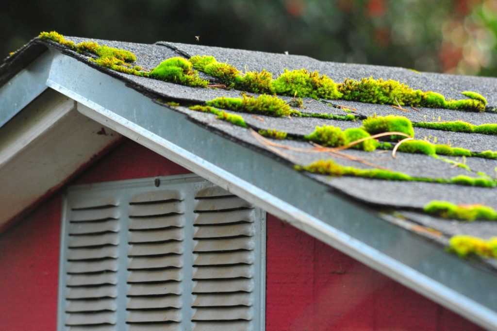 What is moss removal and how much does it cost?